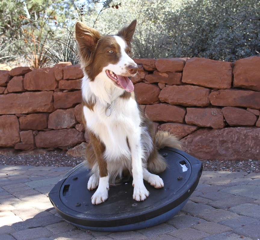 2 Cool Border Collies 1 Training Conditioning And Rehab With My
